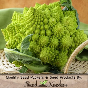 romanesco broccoli seeds by seeds needs